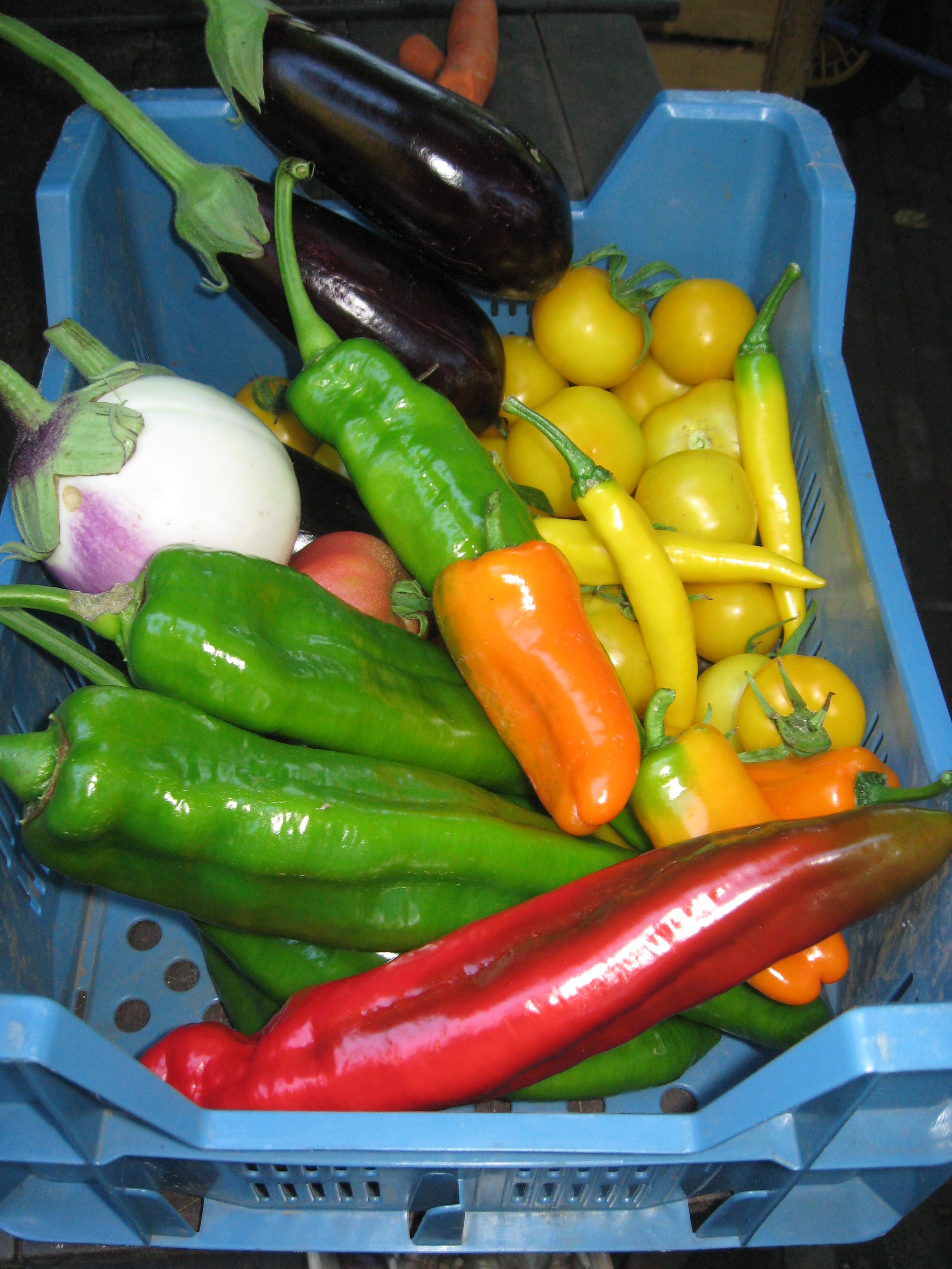 Biologische groente in krat
