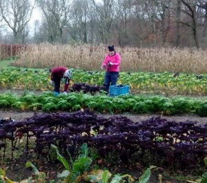 Vrijwilligers werken op het land